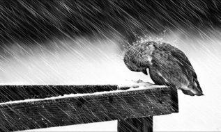 زمستان انحطاط
